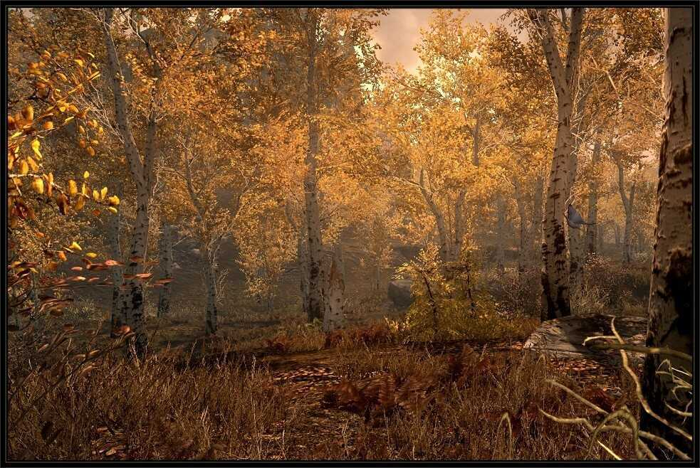 Skyrim: ecco come gli alberi mi hanno insegnato a divertirmi | LIFEinGAMES