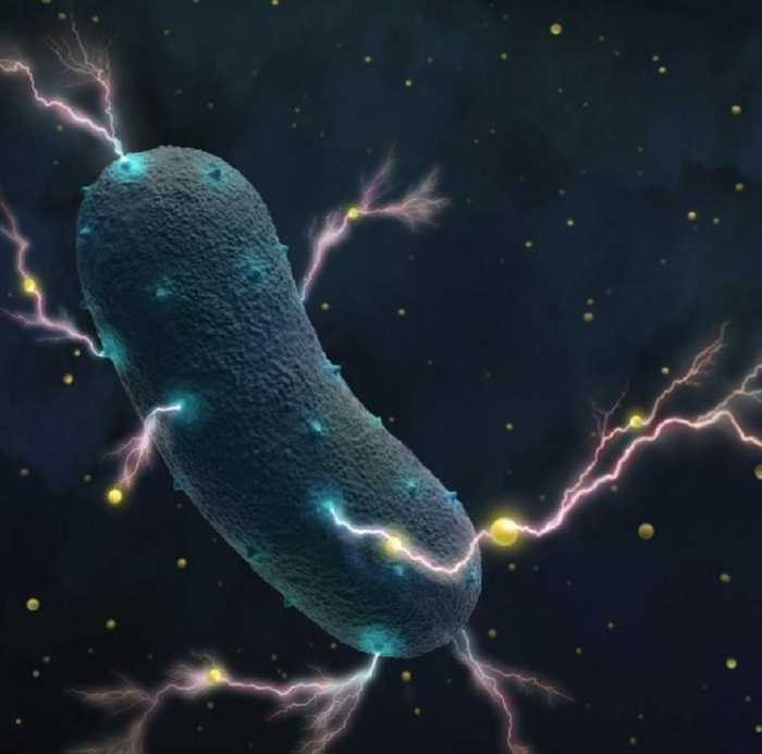 Biologia: i batteri del nostro intestino producono energia elettrica