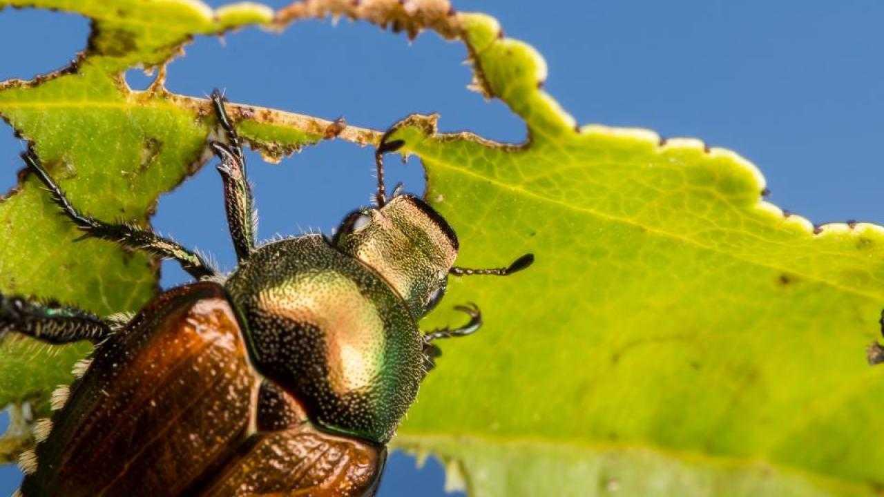 Clima e insetti: il riscaldamento globale rende più voraci i parassiti