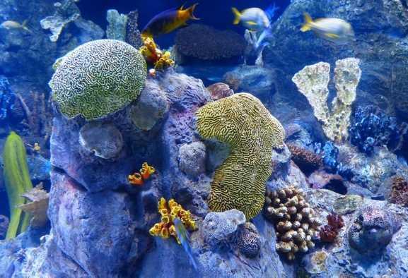 Biologia: l'animale più antico mai scoperto era una spugna