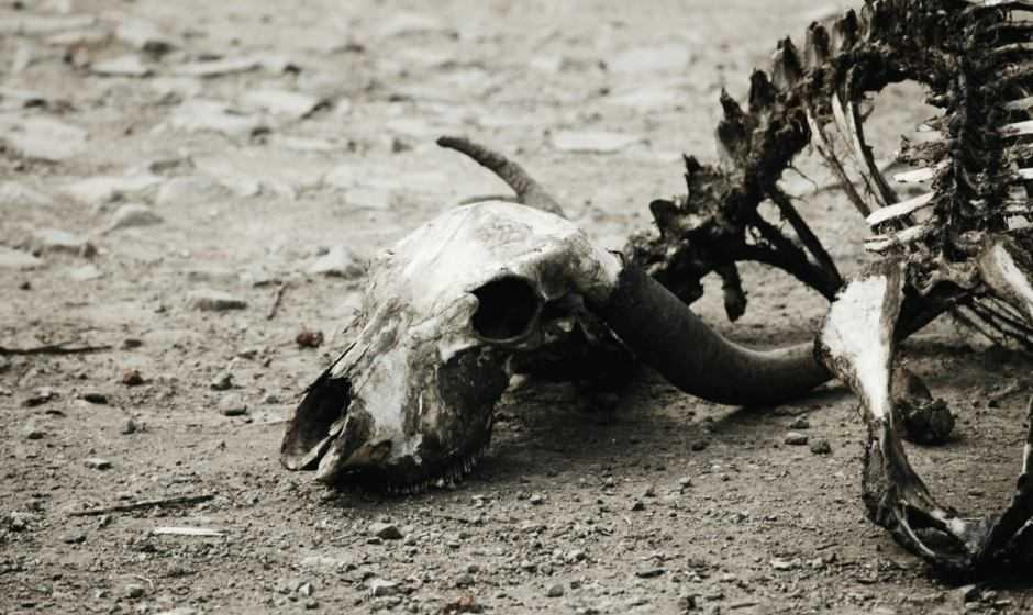 Ecologia: i mammiferi non sopravviveranno alla sesta estinzione di massa