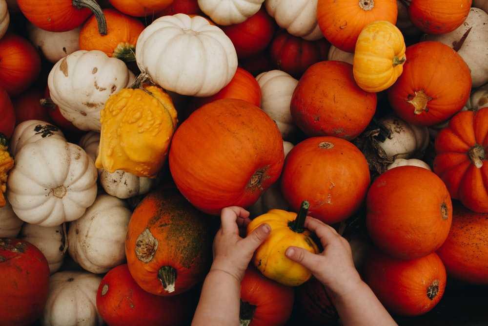 Scienza del cibo: la zucca, curiosità tra cucina e bellezza