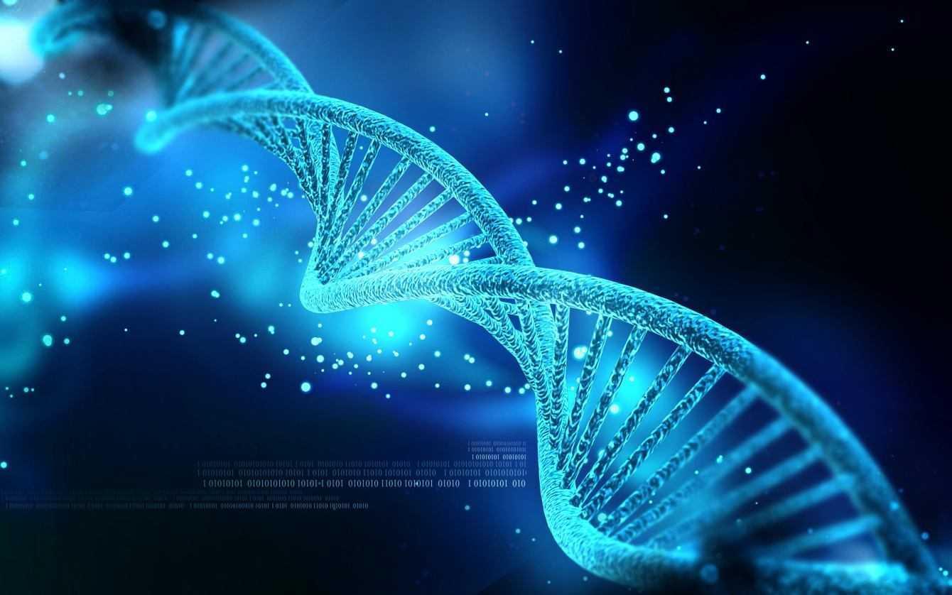 Biologia: svelato il segreto della memoria