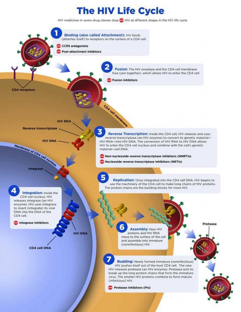 Medicina: curato l'AIDS con l'eradicazione del virus HIV