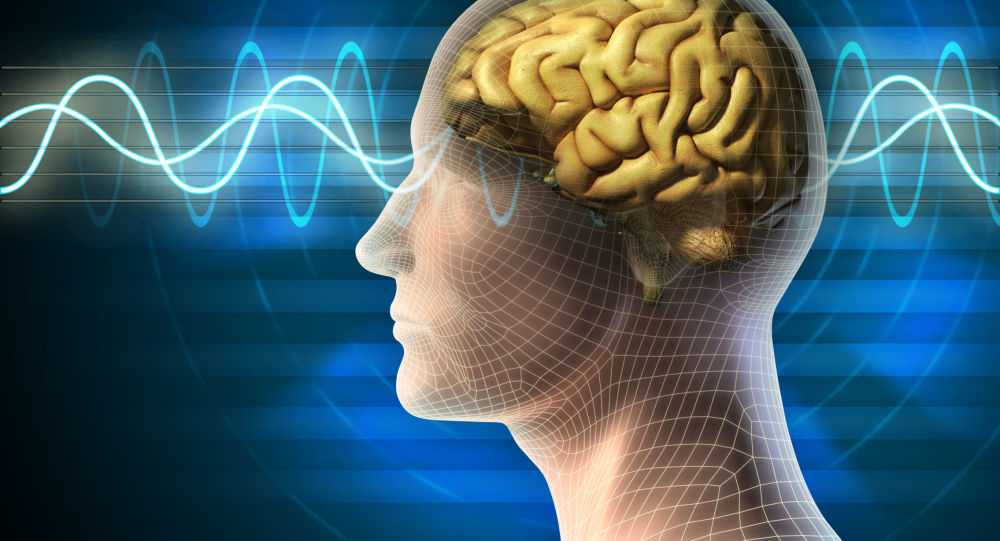 Biologia: un ricercatore padovano riscrive la mappa del cervello