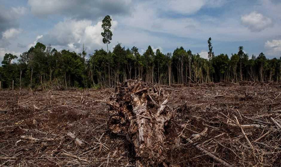 Ecologia: i cambiamenti climatici e la deforestazione in Italia