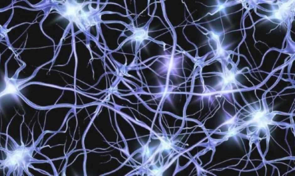 Biologia: il cervello è in grado di produrre neuroni fino ai 90 anni