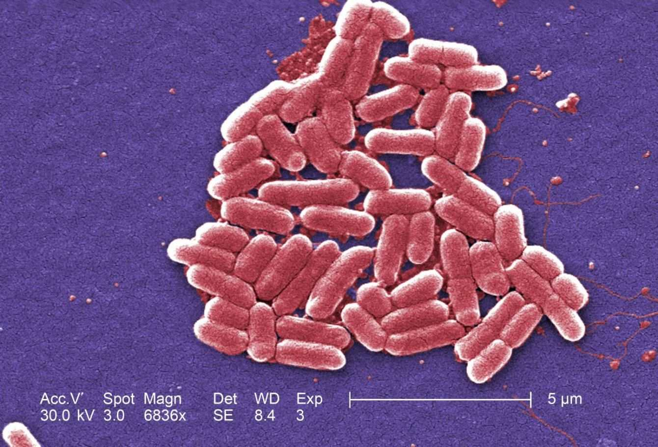 Biotecnologie: cellule artificiali producono energia per fotosintesi