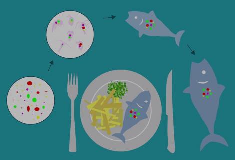 Micro-plastiche: dal mare alla nostra tavola