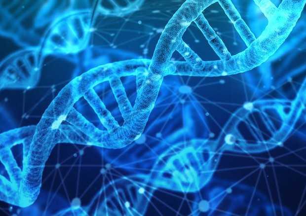 DNA sintetico: creato il primo organismo vivente | Biologia