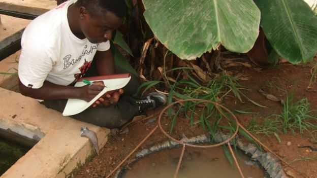 Eliminare le zanzare: scoperto fungo killer