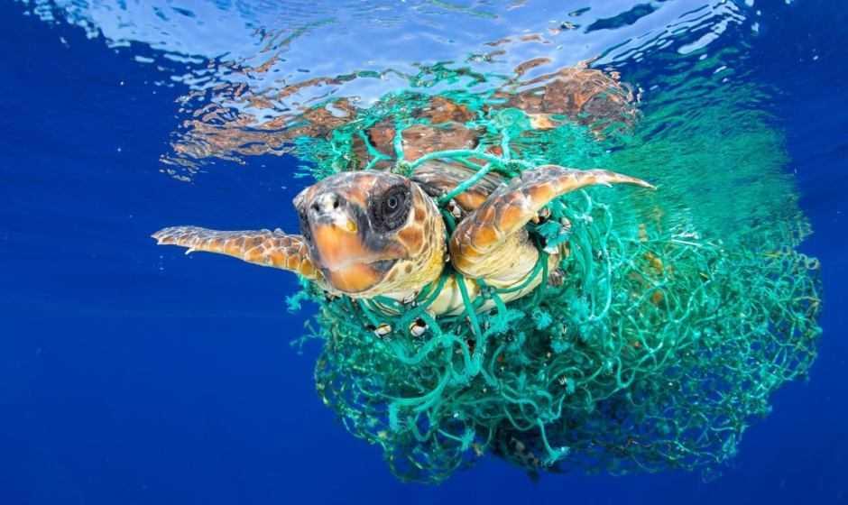 Inquinamento da plastica: mangiamo 5 grammi di microplastiche ogni giorno | Ecologia