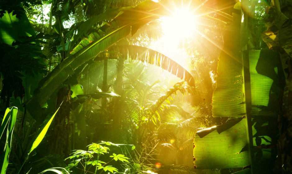 Estinzione: scomparse più piante che animali | Ecologia