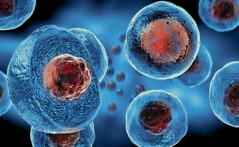 Cellule staminali del sangue: prodotte in grande quantità | Biologia