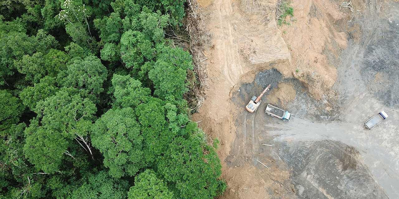 Amazzonia: come l'uomo influenza la dispersione dei semi | Ambiente
