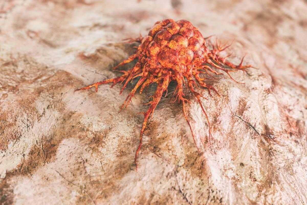 Cancro: linfociti e neutrofili contro i tumori | Biologia