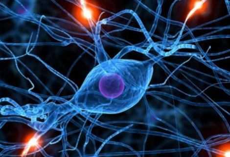 DNA: trovata proteina che ripara il DNA dei neuroni | Medicina