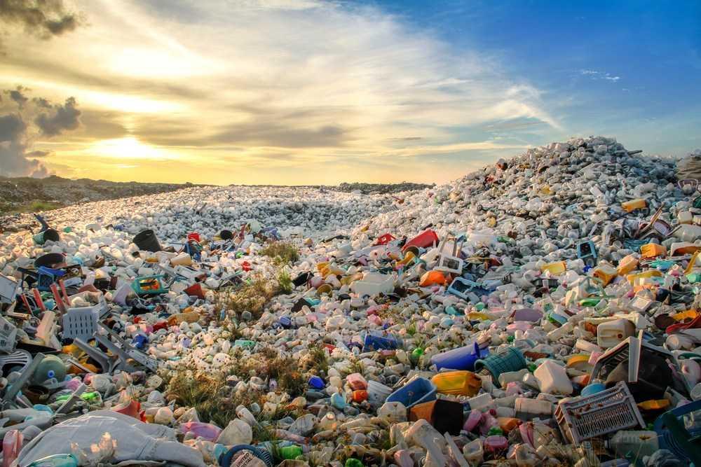 Pioppo: arma contro l'inquinamento da plastica | Ecologia