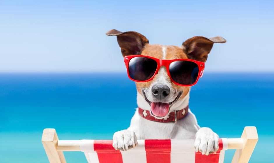 Consigli per viaggi su misura per cani e gatti
