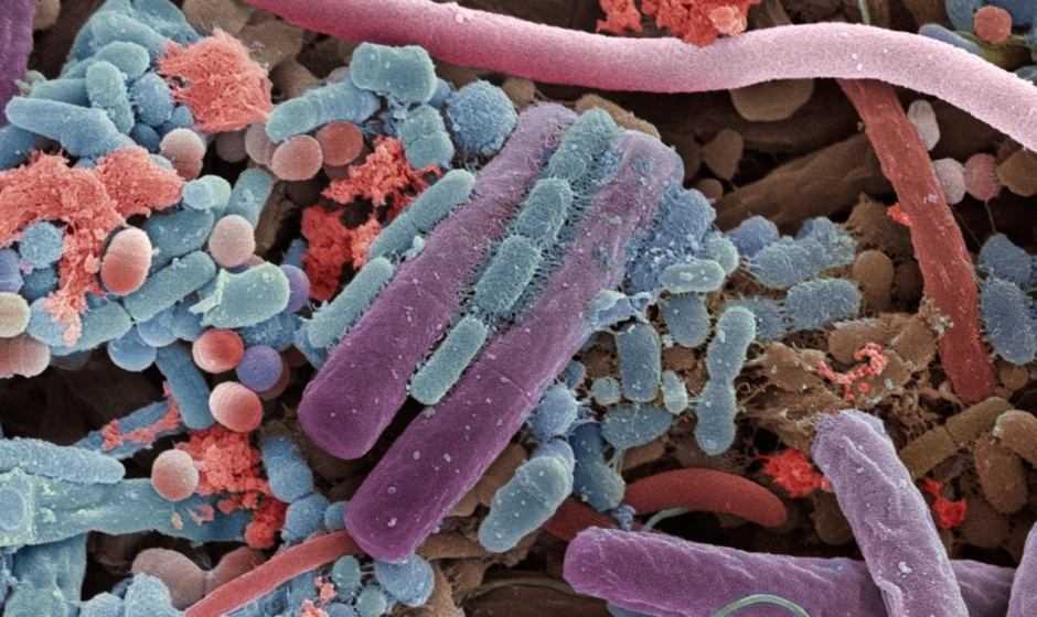 Flora batterica: più batteri sul corpo che stelle in cielo | Biologia