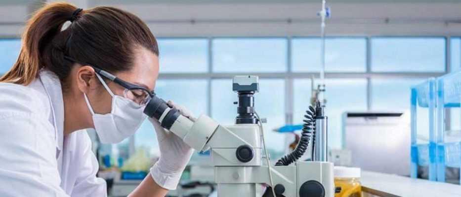 Embrioni ibridi per la creazione di nuovi organi | Biologia