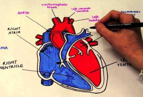 Cuore: stampato un cuore artificiale in 3D | Medicina