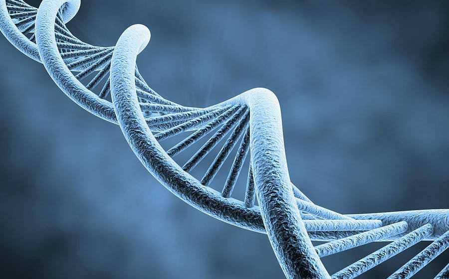 DNA: in arrivo la prima mappa 3D del DNA | Biologia