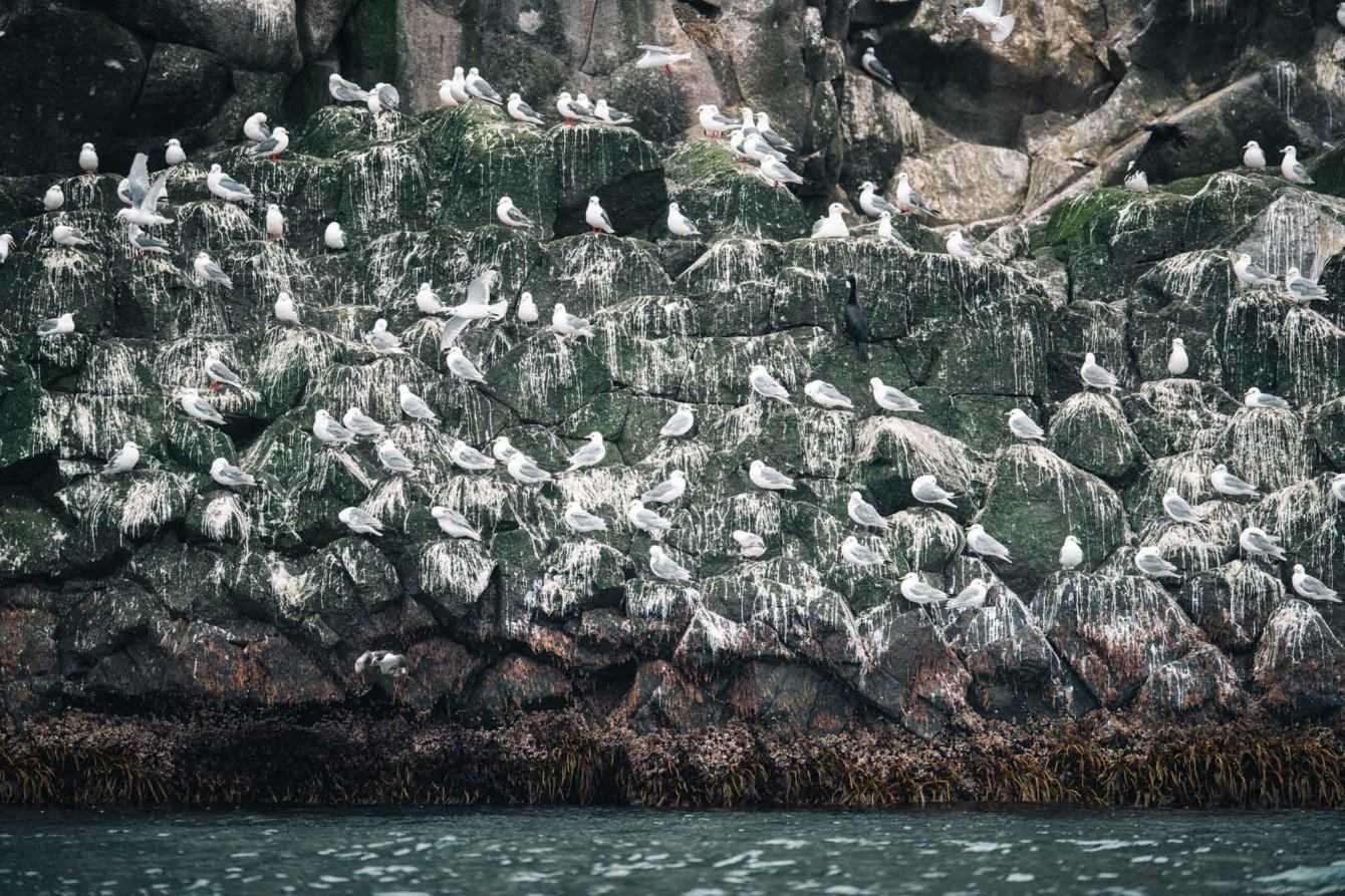 Kirill Umrikhin racconta le Isole del Commodoro