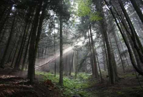 Boschi italiani: 10 curiosità e miti da sfatare   Ecologia