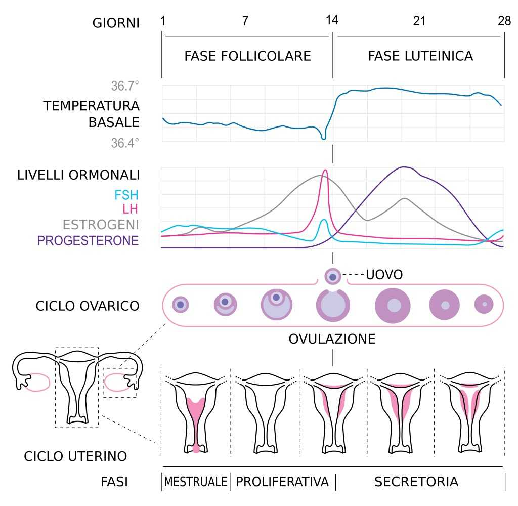 Pillola anticoncezionale addio? Un contraccettivo che dura un mese | Medicina