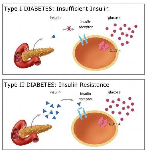 Diabete: insulina prodotta tramite stimolazione luminosa | Biologia