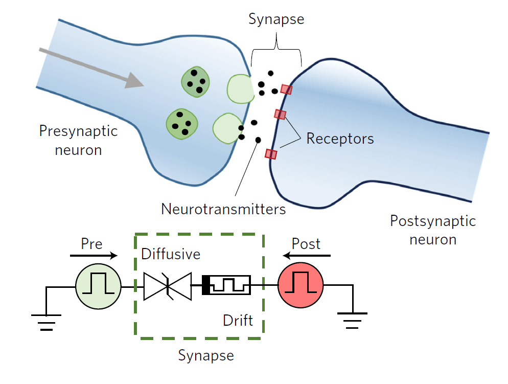 Memristor e reti neurali simulano la psicologia di Pavlov | Tecnologia