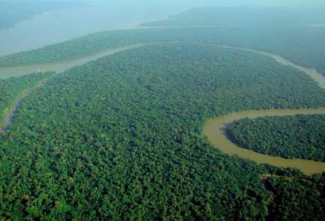 Amazzonia: come l'uomo influenza la dispersione dei semi   Ambiente