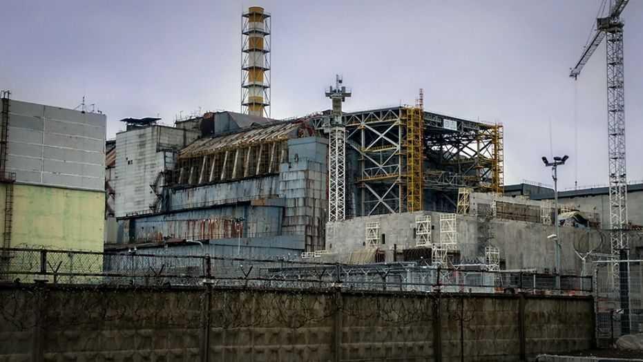 Funghi di Chernobyl: si nutrono veramente di radiazioni?