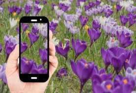 Passione fiori: le migliori app per riconoscerli