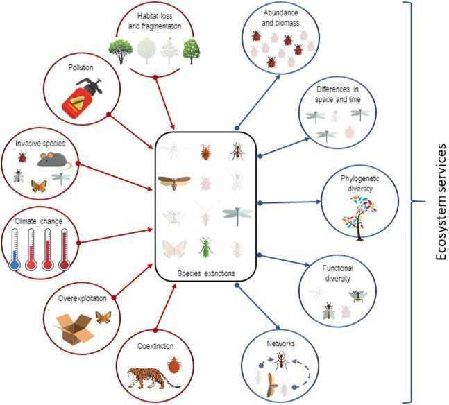 Insetti: verso una nuova estinzione di massa? | Ecologia