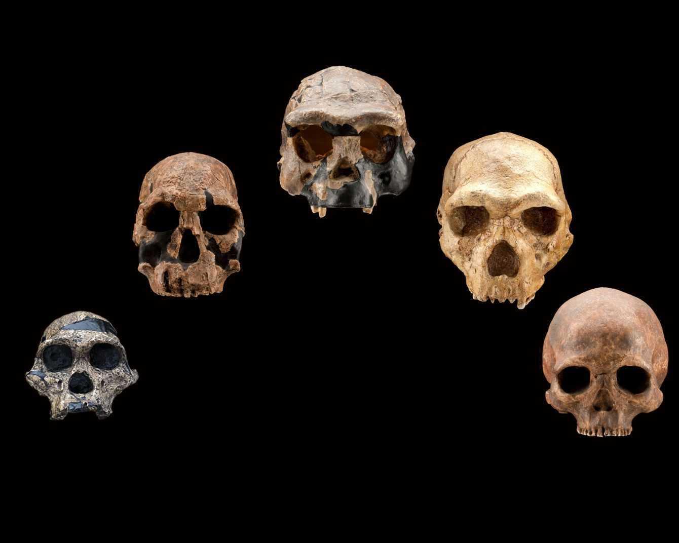 Darwin Day: perché festeggiare l'evoluzione e gli eventi in Italia
