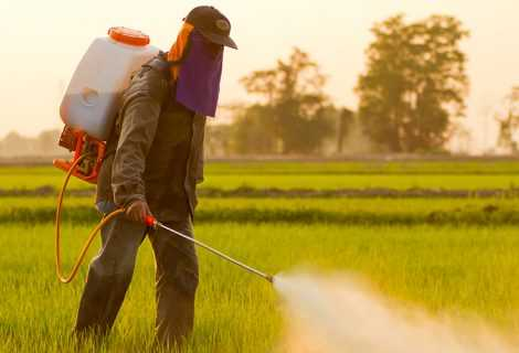 Pesticidi e api: una vespa sviluppa resistenza   Ecologia