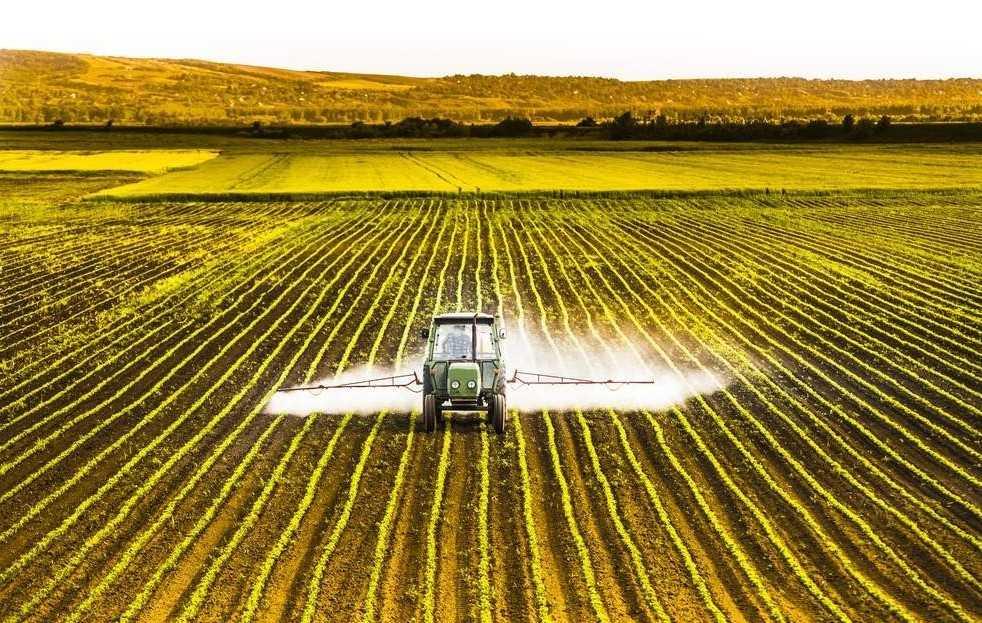 Pesticidi e api: una vespa sviluppa resistenza | Ecologia