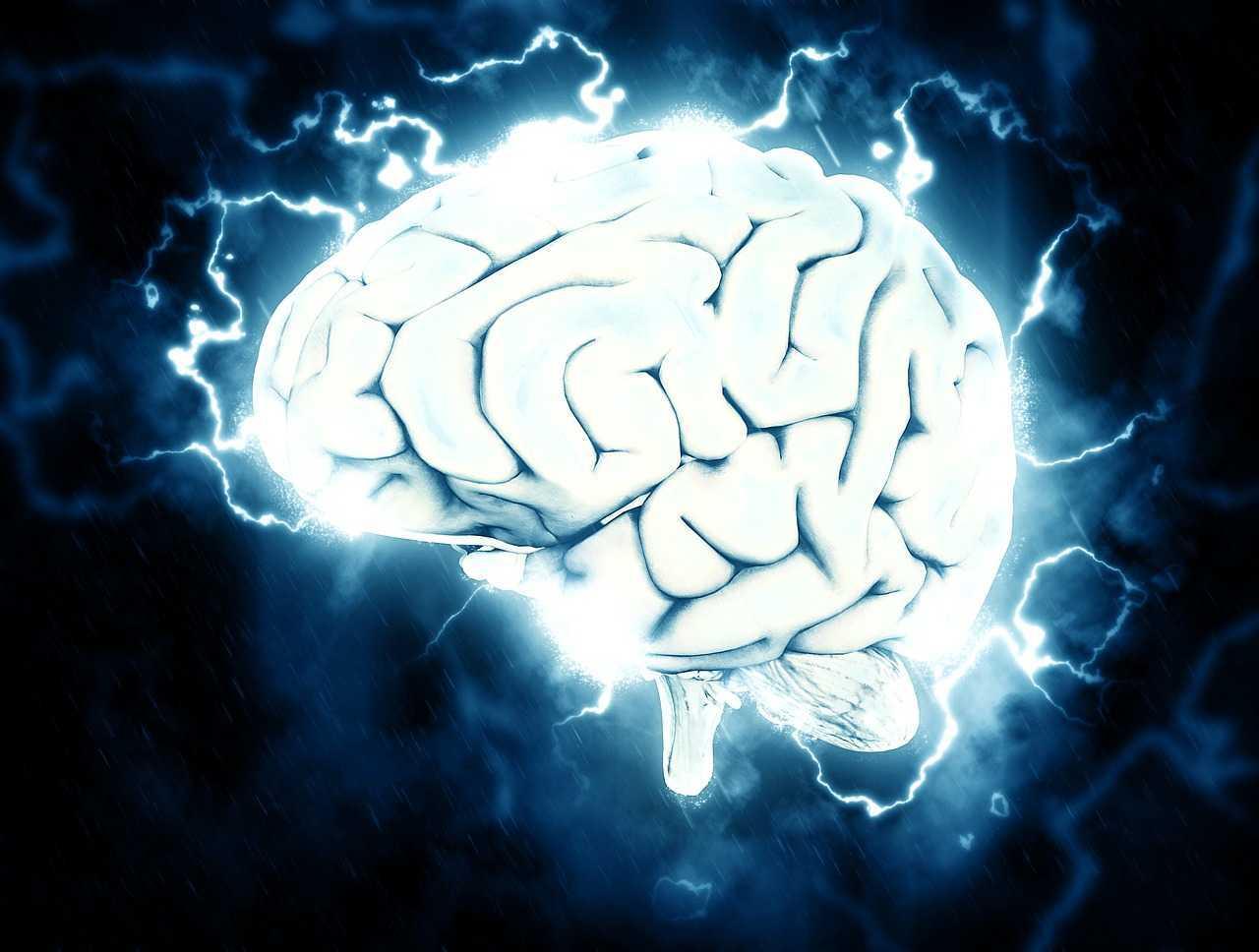Video virali: ecco come il cervello li prevede | Neurobiologia