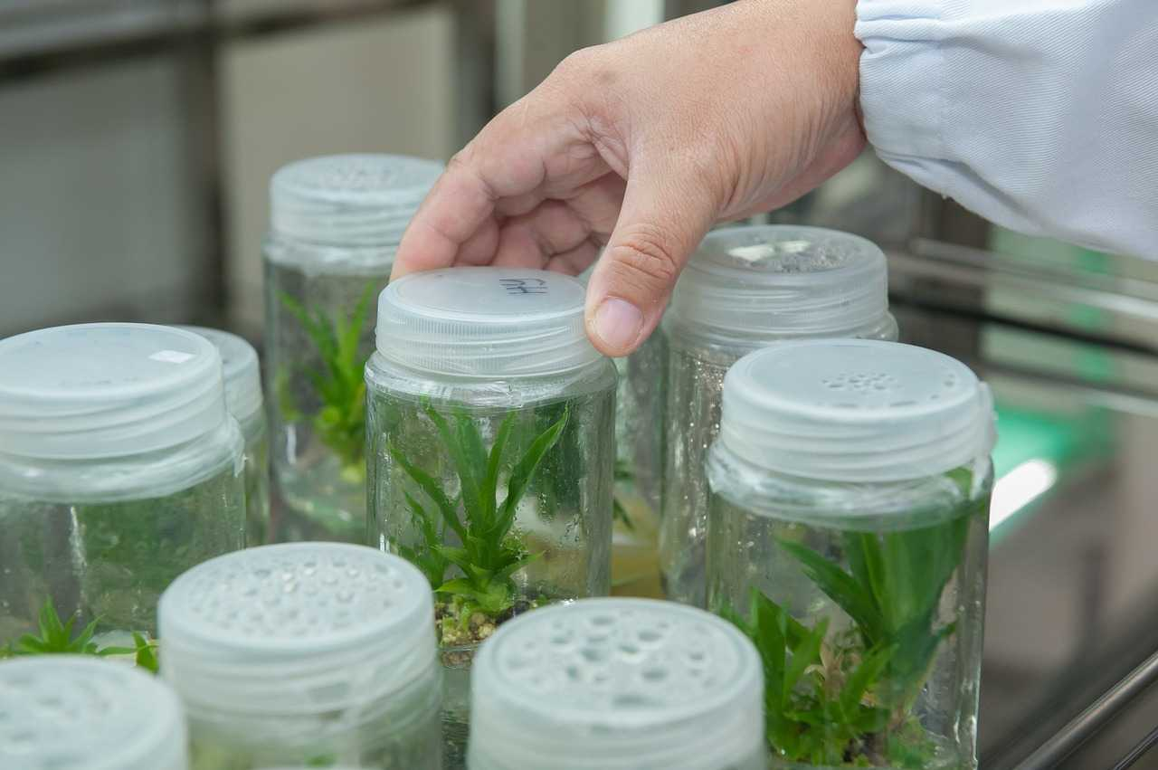 Fotosintesi: nuove interazioni molecolari | Biotecnologie
