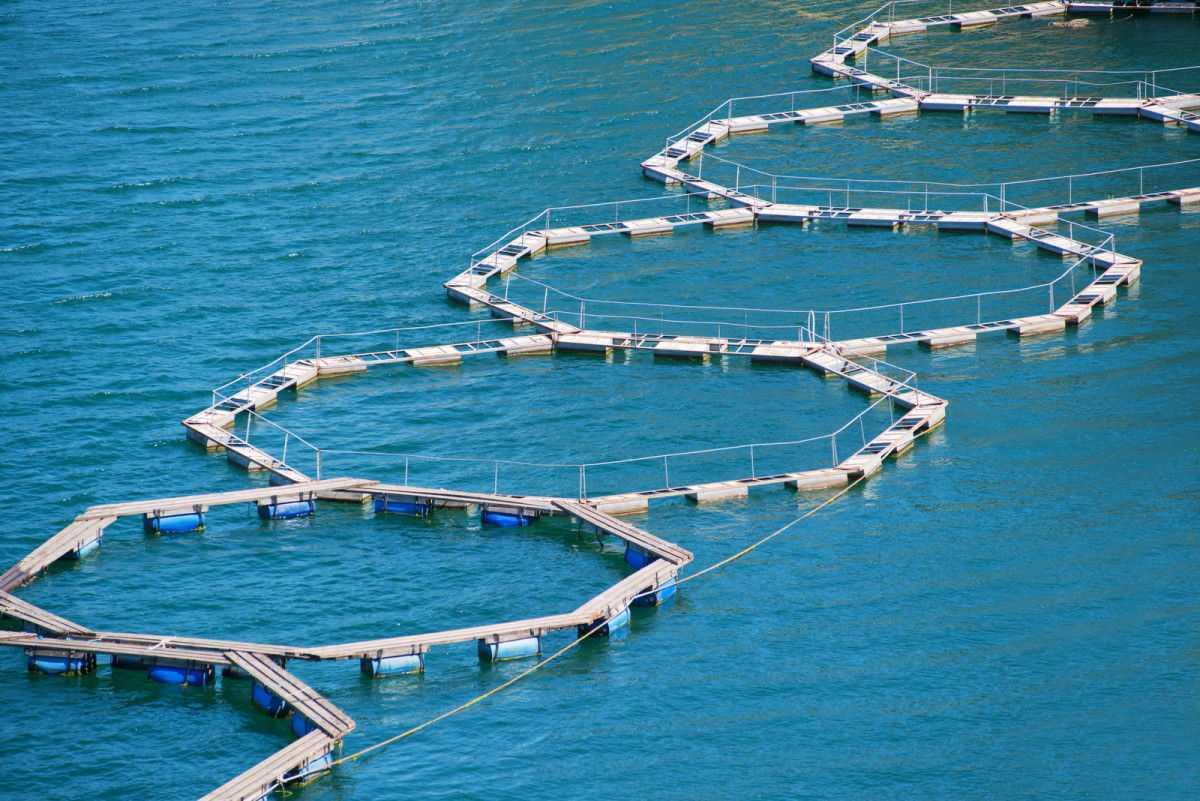 Antibiotici e riscaldamento globale: acquacoltura al crocevia