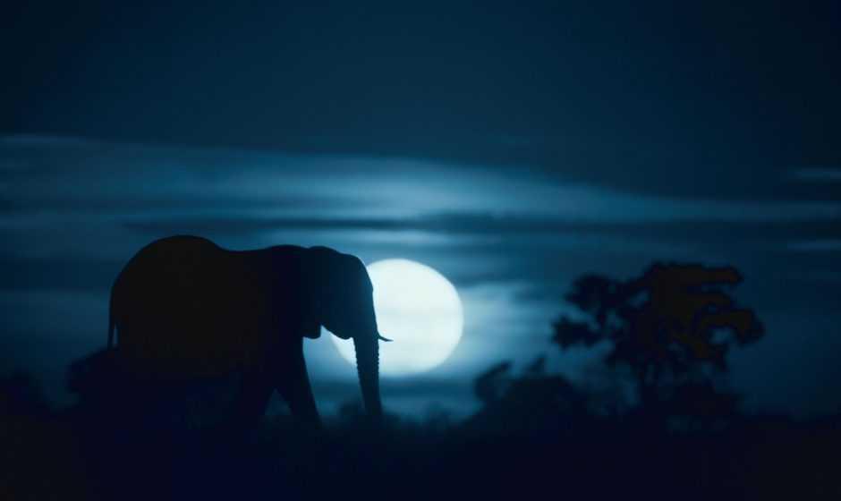 Recensione Notte sul pianeta Terra: la docuserie all'avanguardia