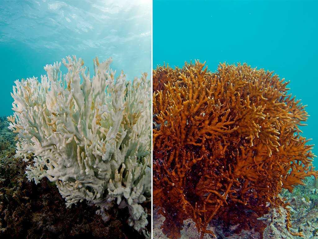 Salvare barriera corallina: nuvole artificiali contro il riscaldamento dei mari | Ecologia