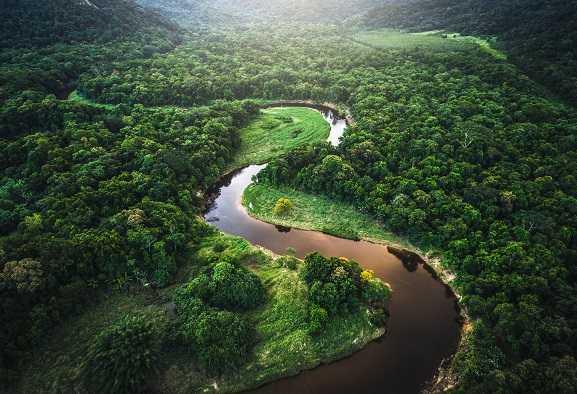 Pandemie: foresta amazzonica come possibile origine