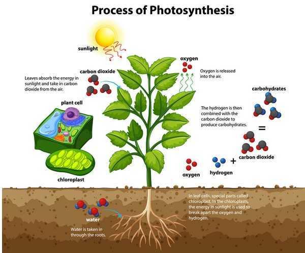 "Energia pulita: un dispositivo ""replica"" la fotosintesi"