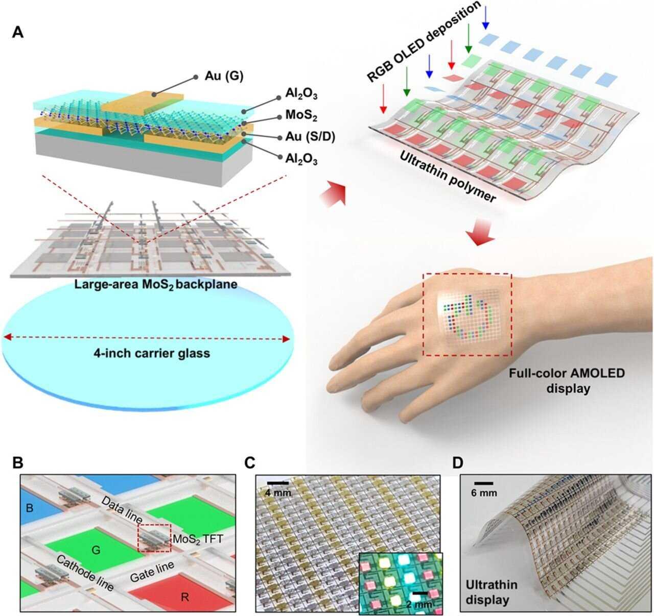 Display OLED indossabili: si portano sulla pelle | Tecnologia