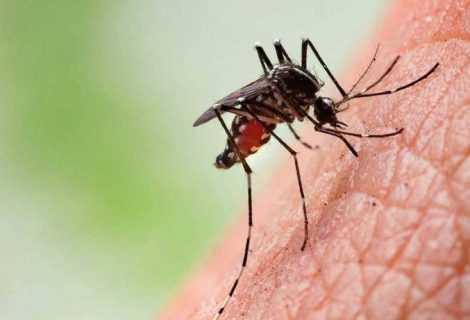 Convertite zanzare femmine in maschi che non pungono