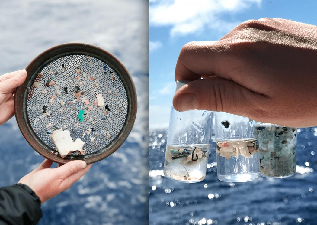 Microplastiche: trovate per le prima volta nei tessuti umani
