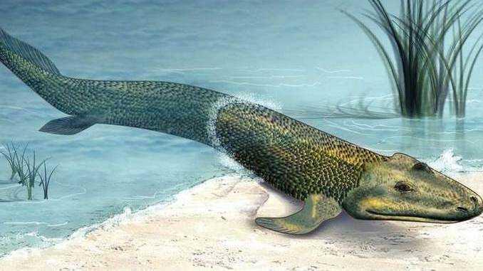 Undici specie di pesci capaci di camminare | Evoluzione